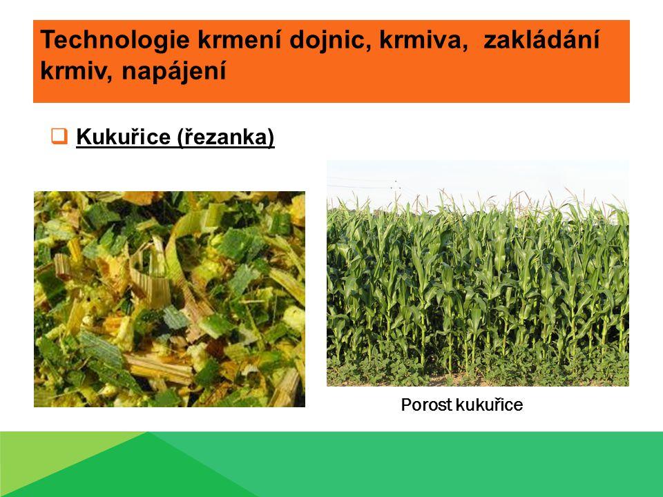 Technologie krmení dojnic, krmiva, zakládání krmiv, napájení  Kukuřice (řezanka) Porost kukuřice