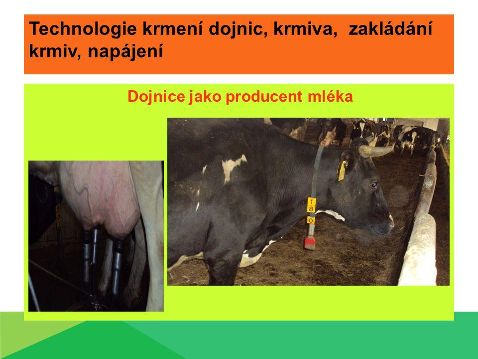 Technologie krmení dojnic, krmiva, zakládání krmiv, napájení Dojnice jako producent mléka