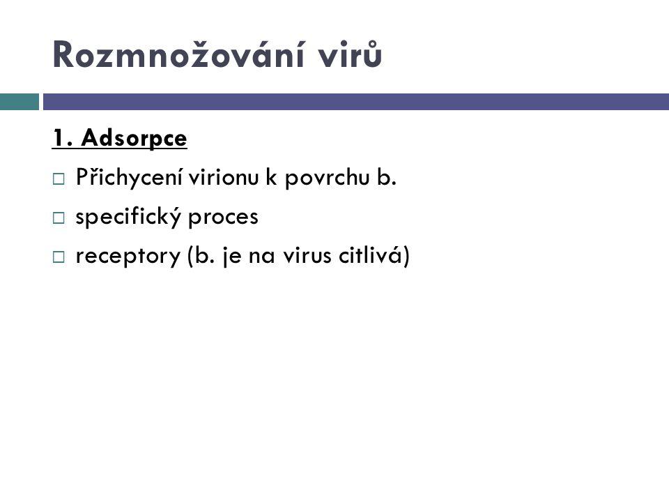 Rozmnožování virů 1. Adsorpce  Přichycení virionu k povrchu b.  specifický proces  receptory (b. je na virus citlivá)