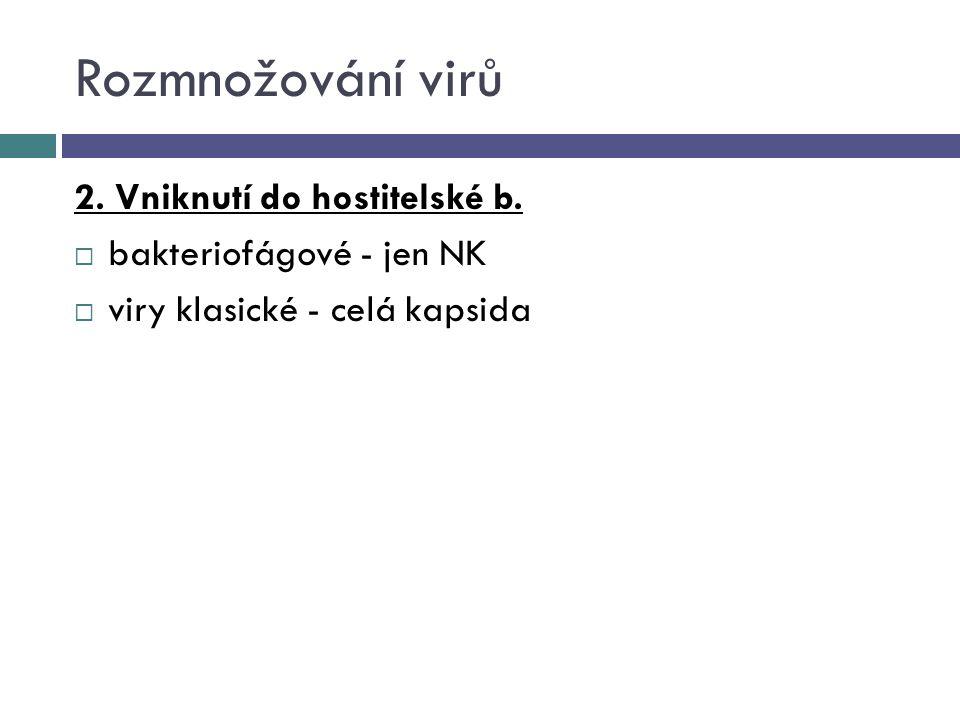Rozmnožování virů 2. Vniknutí do hostitelské b.  bakteriofágové - jen NK  viry klasické - celá kapsida