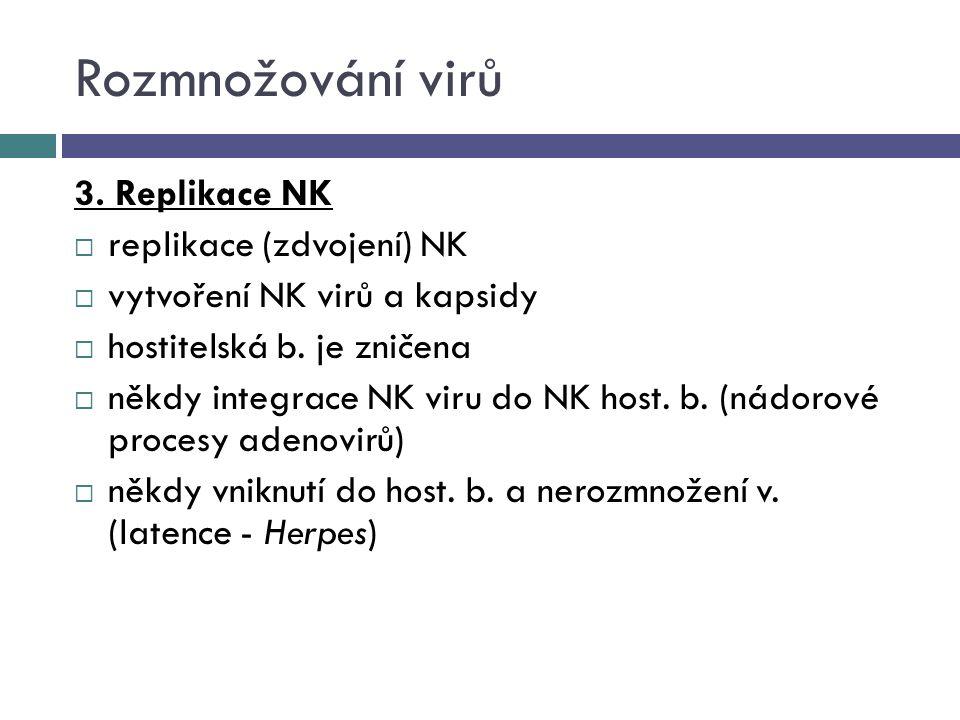 Rozmnožování virů 3. Replikace NK  replikace (zdvojení) NK  vytvoření NK virů a kapsidy  hostitelská b. je zničena  někdy integrace NK viru do NK