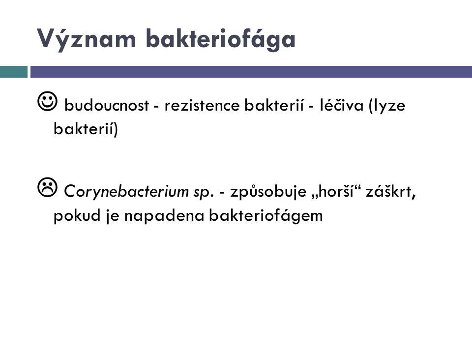 """Význam bakteriofága budoucnost - rezistence bakterií - léčiva (lyze bakterií)  Corynebacterium sp. - způsobuje """"horší"""" záškrt, pokud je napadena bakt"""