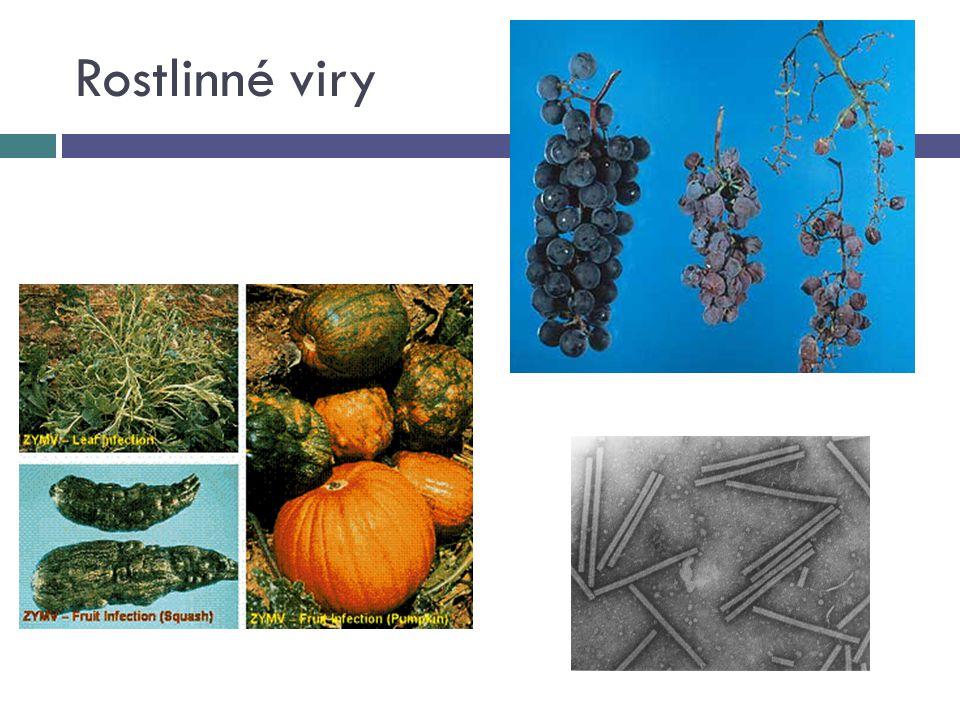 Rostlinné viry