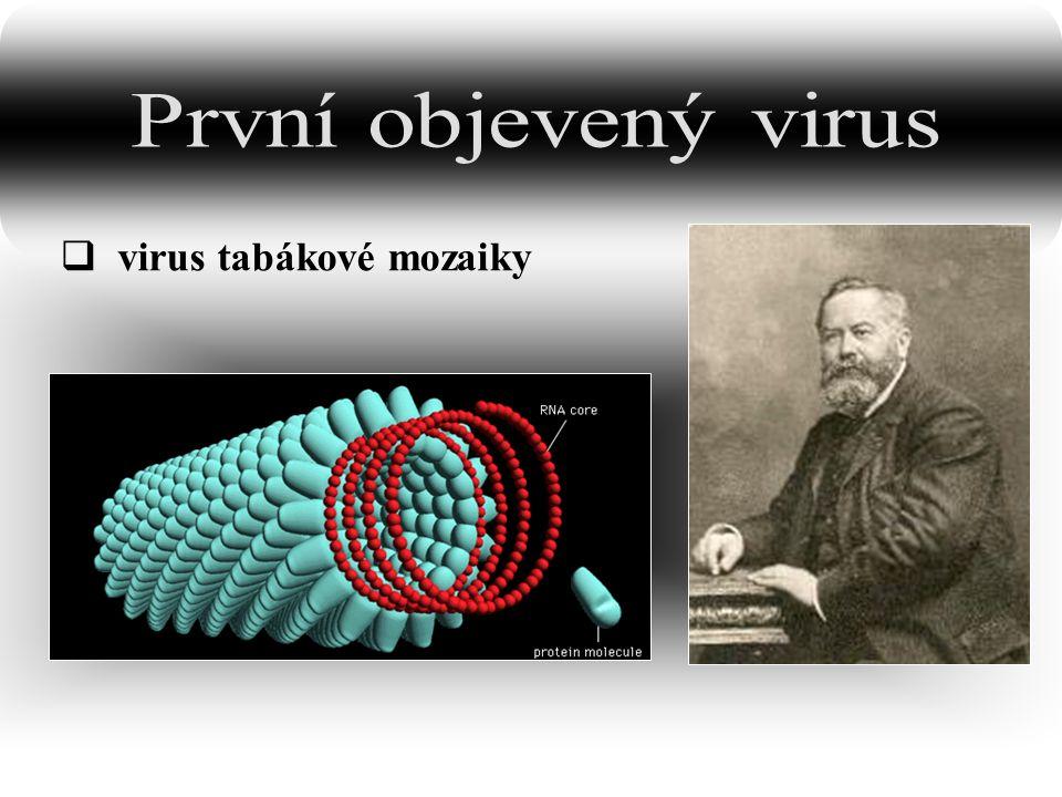 kubická symetrie (pravidelné mnohostěny) helikoidální symetrie bakteriofág: kubická symetrie hlavičky helikoidální symetrie obaleného viru