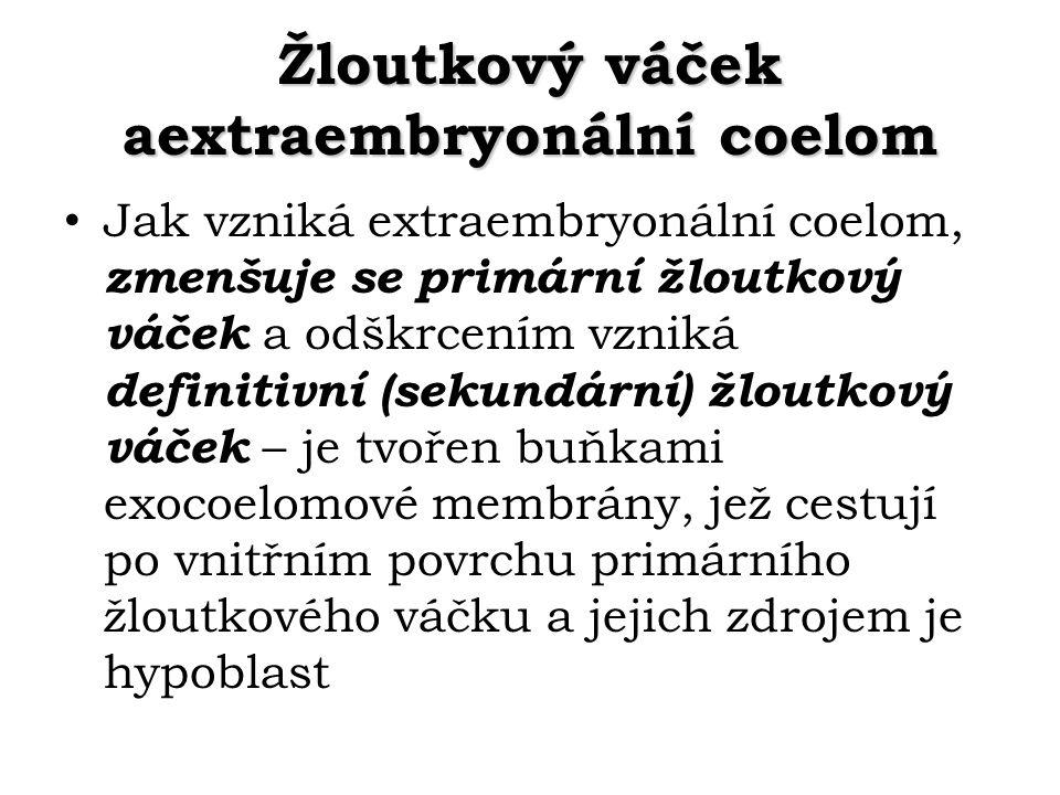 Žloutkový váček aextraembryonální coelom Jak vzniká extraembryonální coelom, zmenšuje se primární žloutkový váček a odškrcením vzniká definitivní (sek