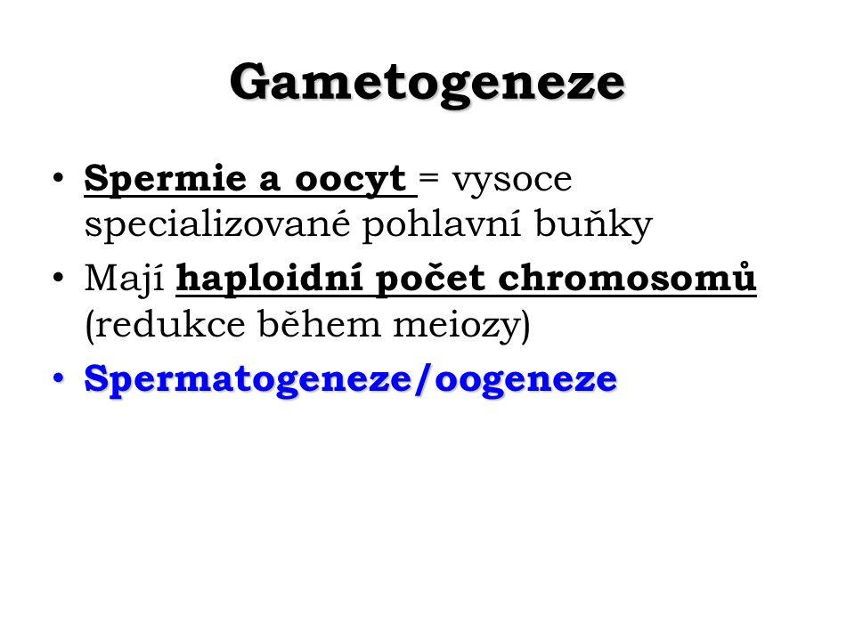 Gametogeneze Spermie a oocyt = vysoce specializované pohlavní buňky Mají haploidní počet chromosomů (redukce během meiozy) Spermatogeneze/oogeneze Spermatogeneze/oogeneze