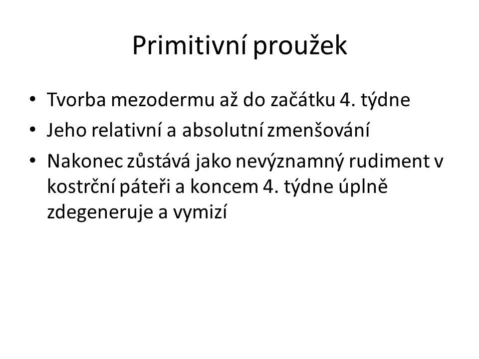 Primitivní proužek Tvorba mezodermu až do začátku 4.