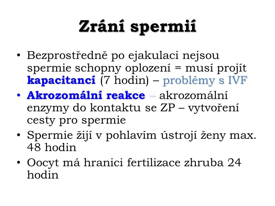 Zrání spermií kapacitancí problémy s IVF Bezprostředně po ejakulaci nejsou spermie schopny oplození = musí projít kapacitancí (7 hodin) – problémy s IVF Akrozomální reakce – Akrozomální reakce – akrozomální enzymy do kontaktu se ZP – vytvoření cesty pro spermie Spermie žijí v pohlavím ústrojí ženy max.