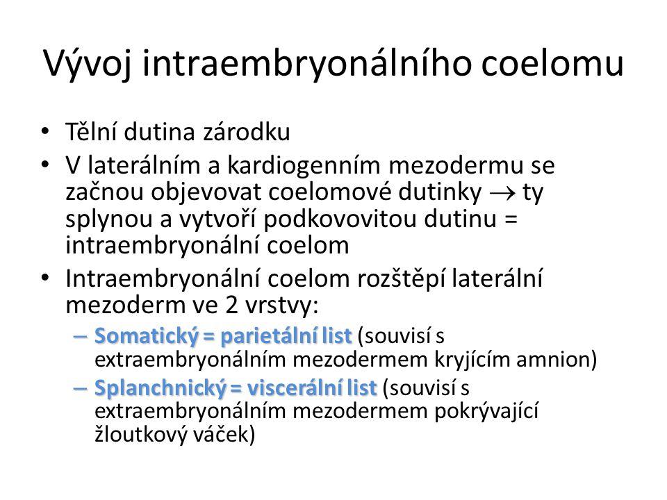 Vývoj intraembryonálního coelomu Tělní dutina zárodku V laterálním a kardiogenním mezodermu se začnou objevovat coelomové dutinky  ty splynou a vytvoří podkovovitou dutinu = intraembryonální coelom Intraembryonální coelom rozštěpí laterální mezoderm ve 2 vrstvy: – Somatický = parietální list – Somatický = parietální list (souvisí s extraembryonálním mezodermem kryjícím amnion) – Splanchnický = viscerální list – Splanchnický = viscerální list (souvisí s extraembryonálním mezodermem pokrývající žloutkový váček)