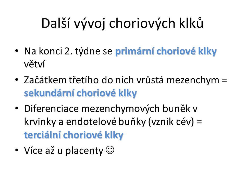 Další vývoj choriových klků primární choriové klky Na konci 2. týdne se primární choriové klky větví sekundární choriové klky Začátkem třetího do nich