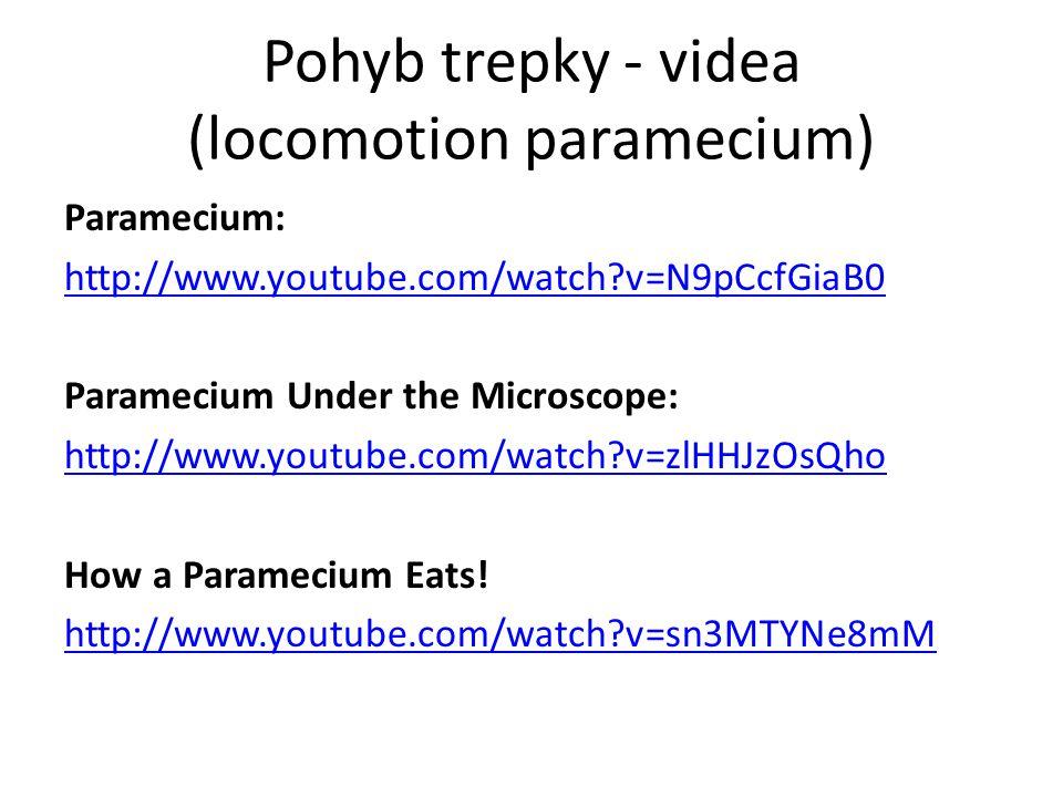 Pohyb trepky - videa (locomotion paramecium) Paramecium: http://www.youtube.com/watch?v=N9pCcfGiaB0 Paramecium Under the Microscope: http://www.youtube.com/watch?v=zlHHJzOsQho How a Paramecium Eats.
