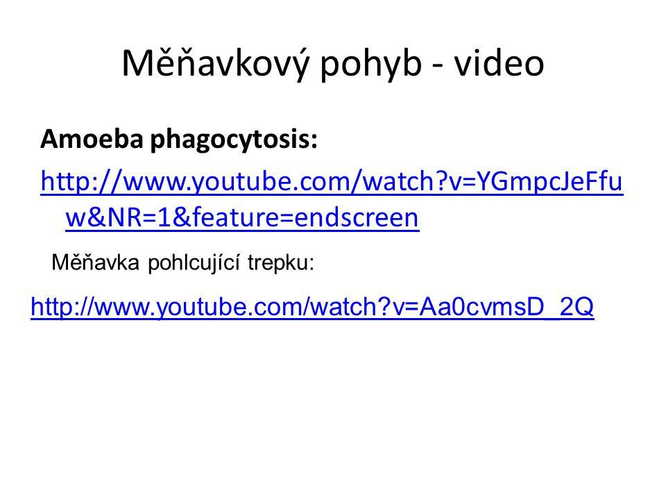 Měňavkový pohyb - video Amoeba phagocytosis: http://www.youtube.com/watch?v=YGmpcJeFfu w&NR=1&feature=endscreen http://www.youtube.com/watch?v=Aa0cvmsD_2Q Měňavka pohlcující trepku: