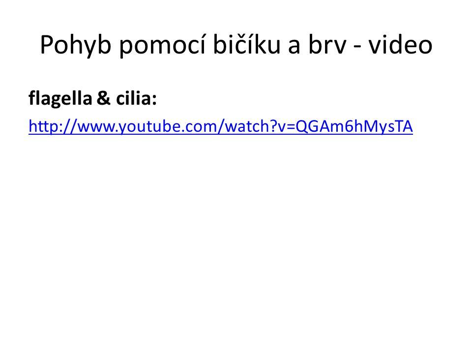 Pohyb pomocí bičíku a brv - video flagella & cilia: http://www.youtube.com/watch?v=QGAm6hMysTA