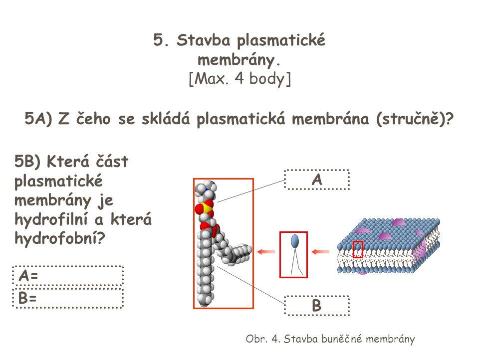 5. Stavba plasmatické membrány. [Max. 4 body] 5A) Z čeho se skládá plasmatická membrána (stručně)? 5B) Která část plasmatické membrány je hydrofilní a