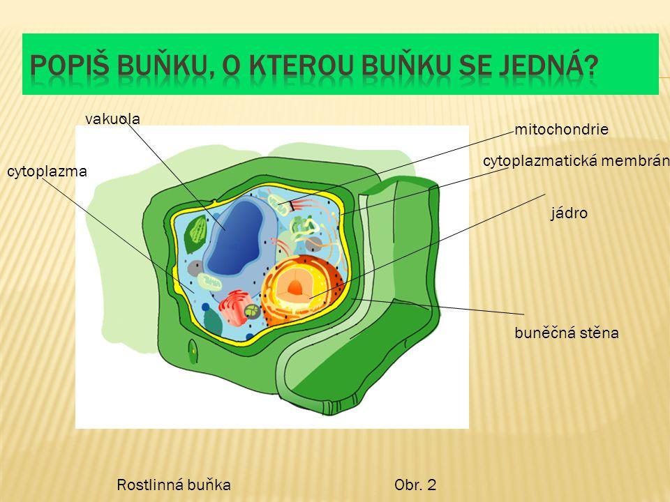 Rostlinná buňkaObr. 2 vakuola mitochondrie cytoplazmatická membrána jádro buněčná stěna cytoplazma