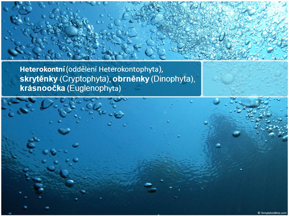 Heterokontní (oddělení Heterokontophyta ), skrytěnky (Cryptophyta), obrněnky (Dinophyta), krásnoočka (Euglenoph yta)
