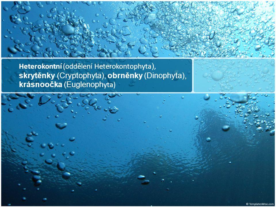 Oddělení Heterokontophyta Pleuronematický bičík (pohybový) Akronematický bičík Chromatofory se 4 membránami Chlorofyl a, c Fukoxantin, vaucheriaxantin Olej, polyfosfátová zrnka – volutin Třídy: Bacillariophyceae Chrysophyceae Xanthophyceae Phaeophyceae