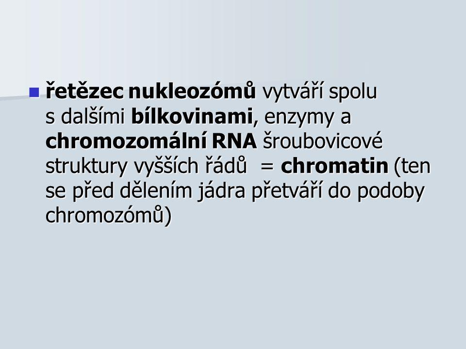 řetězec nukleozómů vytváří spolu s dalšími bílkovinami, enzymy a chromozomální RNA šroubovicové struktury vyšších řádů = chromatin (ten se před dělením jádra přetváří do podoby chromozómů) řetězec nukleozómů vytváří spolu s dalšími bílkovinami, enzymy a chromozomální RNA šroubovicové struktury vyšších řádů = chromatin (ten se před dělením jádra přetváří do podoby chromozómů)