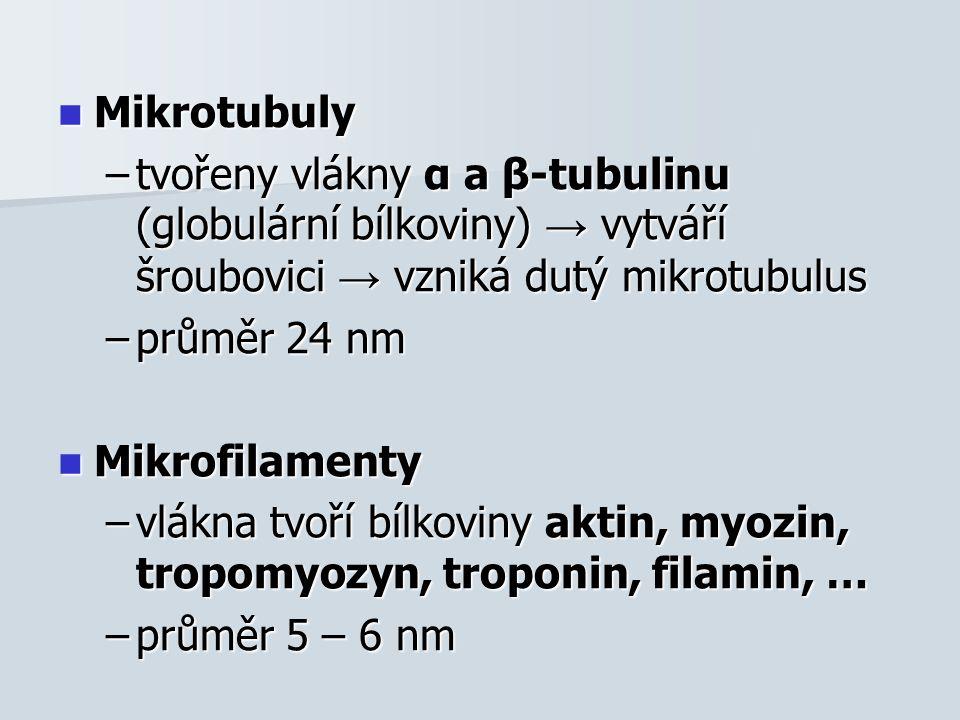 Mikrotubuly Mikrotubuly –tvořeny vlákny α a β-tubulinu (globulární bílkoviny) → vytváří šroubovici → vzniká dutý mikrotubulus –průměr 24 nm Mikrofilamenty Mikrofilamenty –vlákna tvoří bílkoviny aktin, myozin, tropomyozyn, troponin, filamin, … –průměr 5 – 6 nm