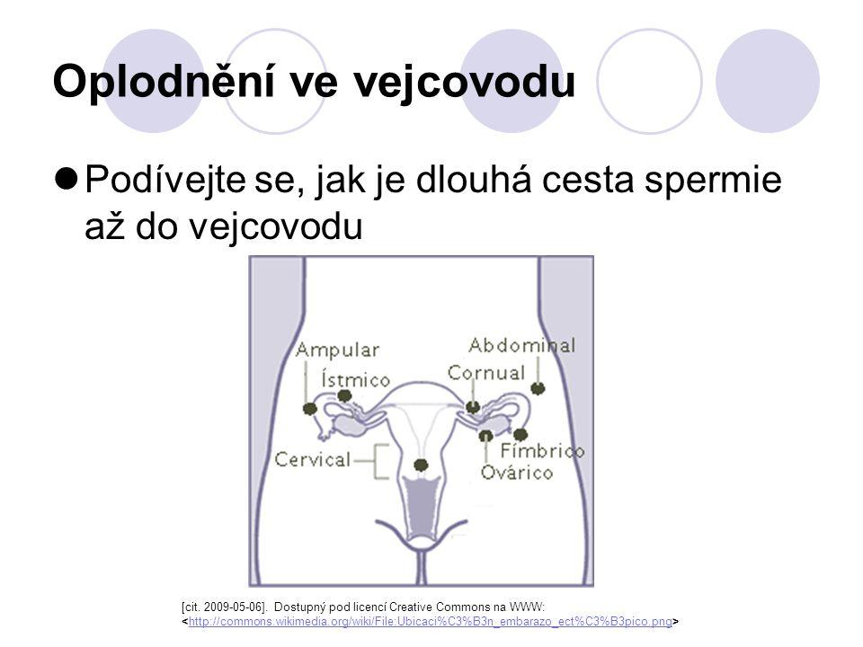 Oplodnění ve vejcovodu Podívejte se, jak je dlouhá cesta spermie až do vejcovodu [cit. 2009-05-06]. Dostupný pod licencí Creative Commons na WWW: http