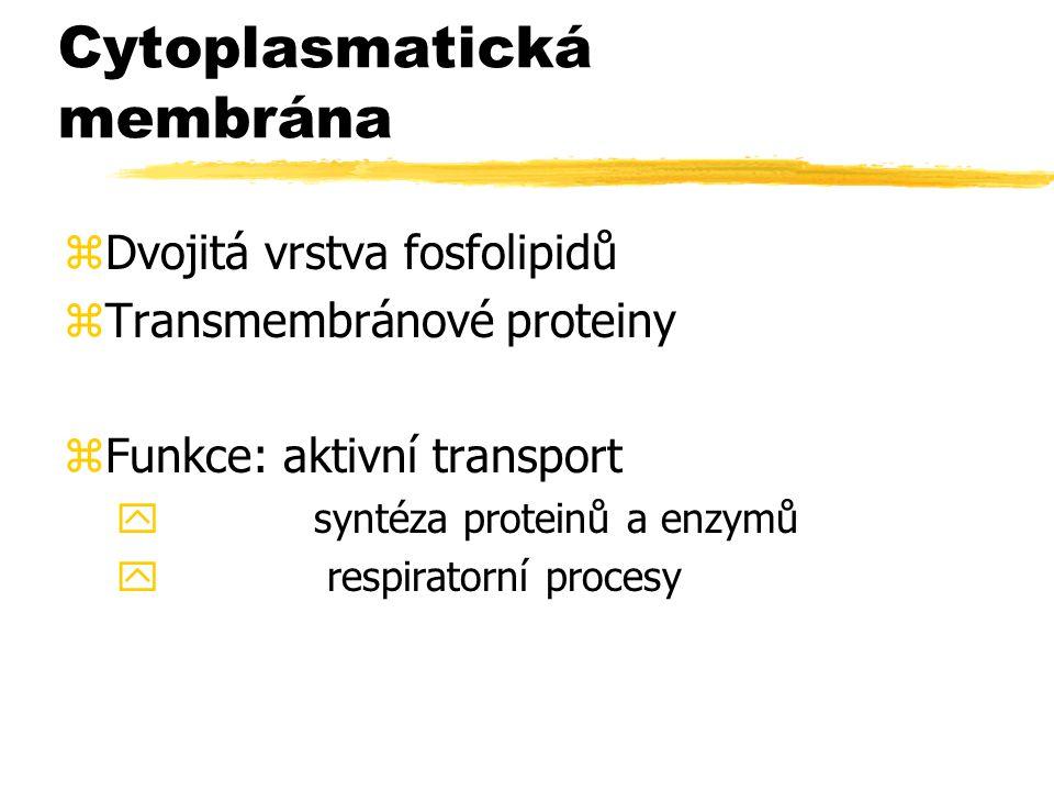 Cytoplasmatická membrána zDvojitá vrstva fosfolipidů zTransmembránové proteiny zFunkce: aktivní transport y syntéza proteinů a enzymů y respiratorní p