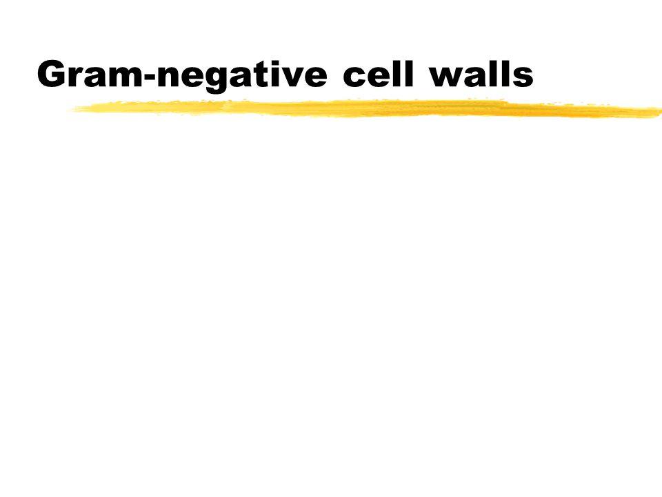 Gram-negative cell walls