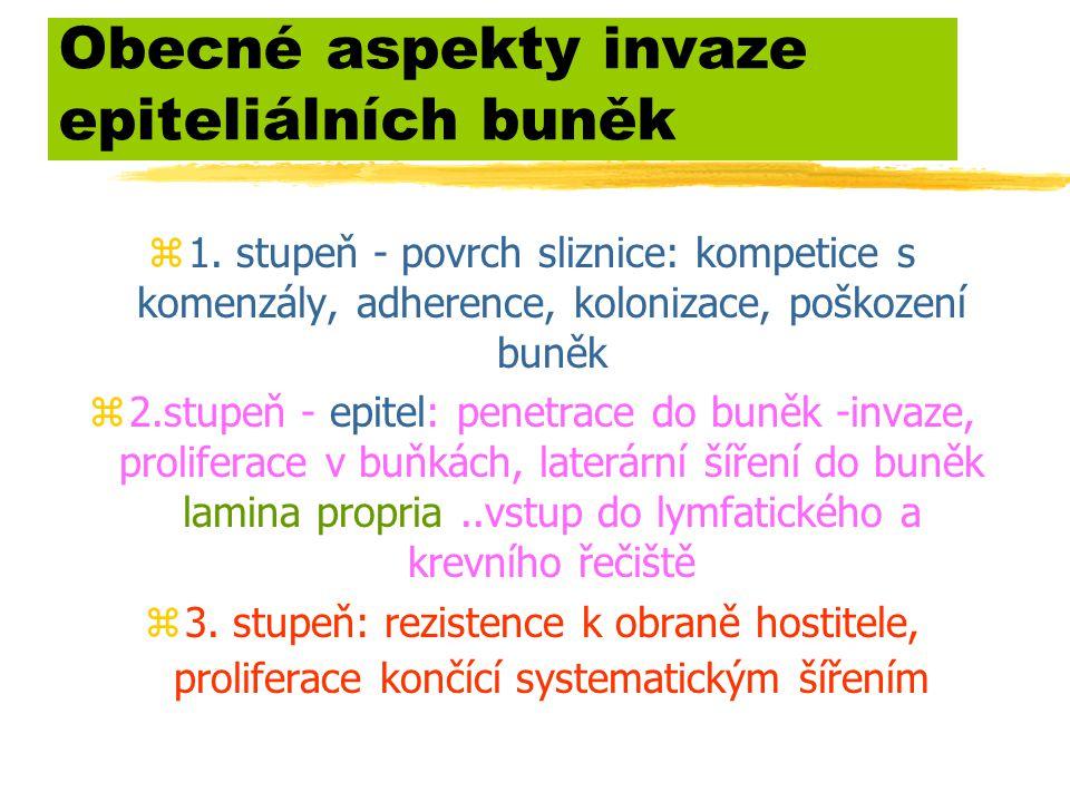 Obecné aspekty invaze epiteliálních buněk z1. stupeň - povrch sliznice: kompetice s komenzály, adherence, kolonizace, poškození buněk z2.stupeň - epit
