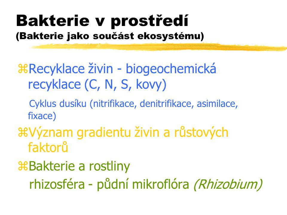 Bakterie v prostředí (Bakterie jako součást ekosystému) zRecyklace živin - biogeochemická recyklace (C, N, S, kovy) Cyklus dusíku (nitrifikace, denitr