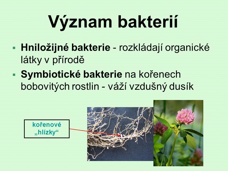 Význam bakterií  Hniložijné bakterie - rozkládají organické látky v přírodě  Symbiotické bakterie na kořenech bobovitých rostlin - váží vzdušný dusí