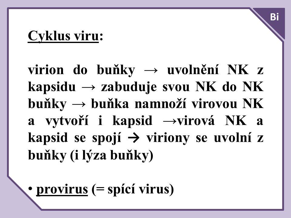 Cyklus viru: virion do buňky → uvolnění NK z kapsidu → zabuduje svou NK do NK buňky → buňka namnoží virovou NK a vytvoří i kapsid →virová NK a kapsid