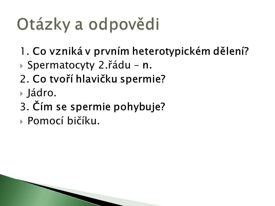 1. Co vzniká v prvním heterotypickém dělení.  Spermatocyty 2.řádu – n.