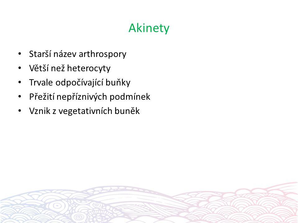 Akinety Starší název arthrospory Větší než heterocyty Trvale odpočívající buňky Přežití nepříznivých podmínek Vznik z vegetativních buněk