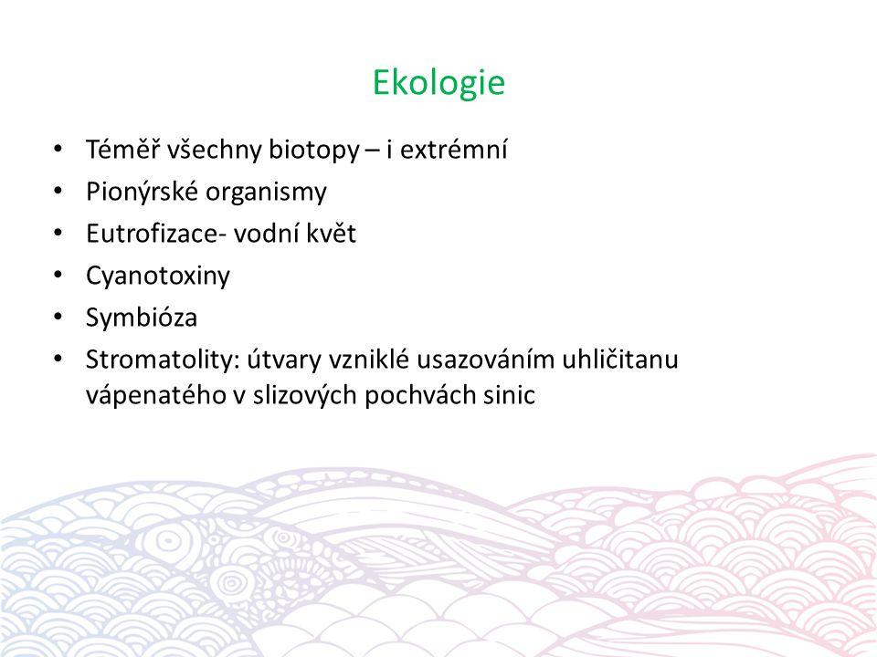 Ekologie Téměř všechny biotopy – i extrémní Pionýrské organismy Eutrofizace- vodní květ Cyanotoxiny Symbióza Stromatolity: útvary vzniklé usazováním u
