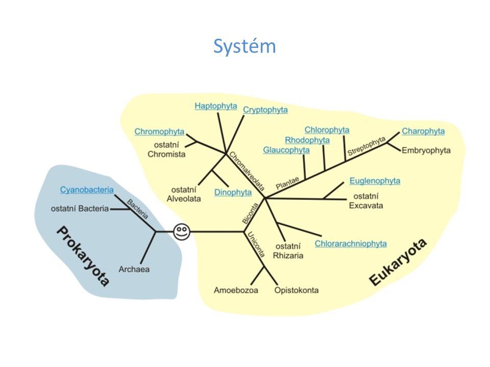 Přehled systému říše Chromista odd.Cryptophyta odd.