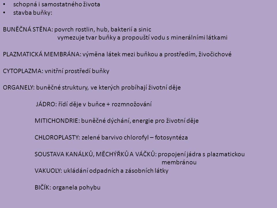 Rostlinná buňka Zdroj: www.botanika.borec.cz