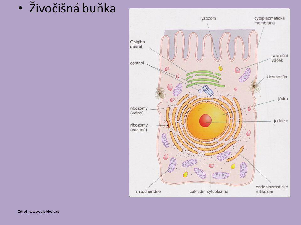 Živočišná buňka Zdroj :www. giobio.ic.cz