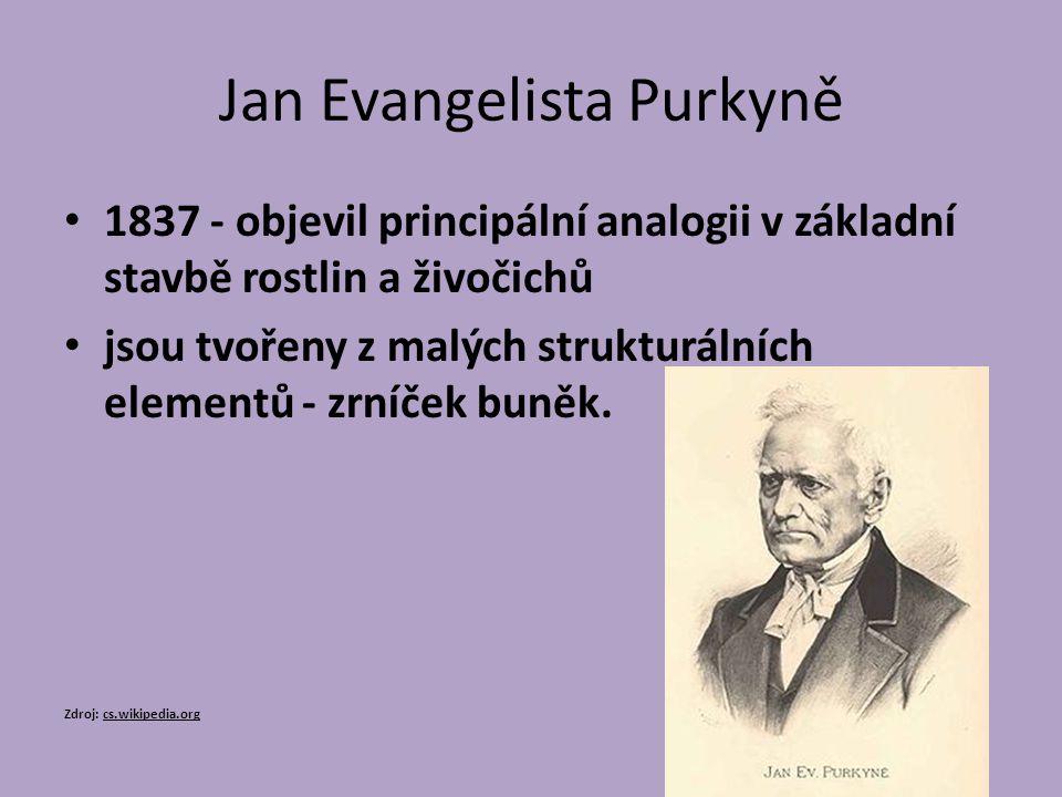Jan Evangelista Purkyně 1837 - objevil principální analogii v základní stavbě rostlin a živočichů jsou tvořeny z malých strukturálních elementů - zrní
