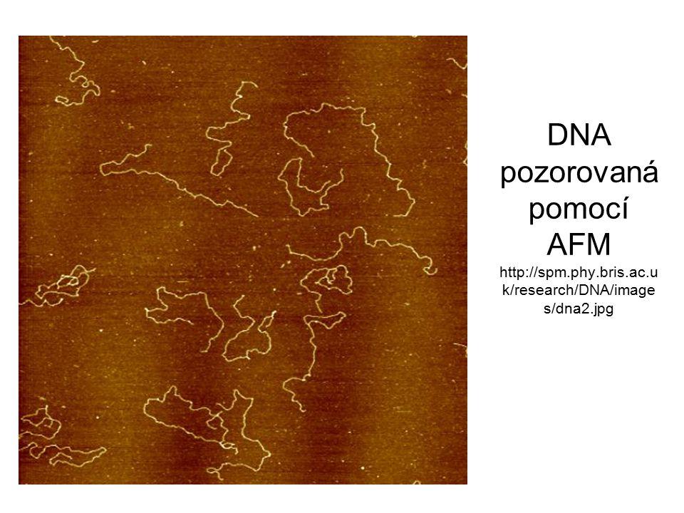 DNA pozorovaná pomocí AFM http://spm.phy.bris.ac.u k/research/DNA/image s/dna2.jpg