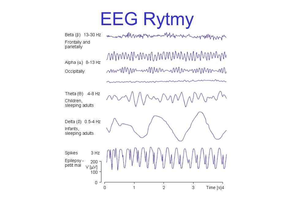 EEG Rytmy