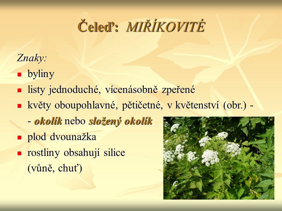 Druhy miříkovitých: Pěstované: koření (plody)KMÍN, FENYKL, KORIANDR koření (plody)KMÍN, FENYKL, KORIANDR kořenová zelenina MRKEV obecná kořenová zelenina MRKEV obecná PETRŽEL zahradní PASTIŇÁK setý MIŘÍK celer naťová zeleninaPETRŽEL kadeřavá naťová zeleninaPETRŽEL kadeřavá KOPR vonný (obr.) Planě rostoucí: BOLŠEVNÍK obecný BRŠLICE kozí noha KERBLÍK lesní BEDRNÍK větší