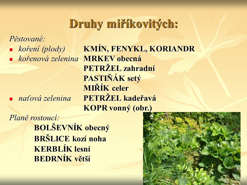 Druhy miříkovitých: Pěstované: koření (plody)KMÍN, FENYKL, KORIANDR koření (plody)KMÍN, FENYKL, KORIANDR kořenová zelenina MRKEV obecná kořenová zelen