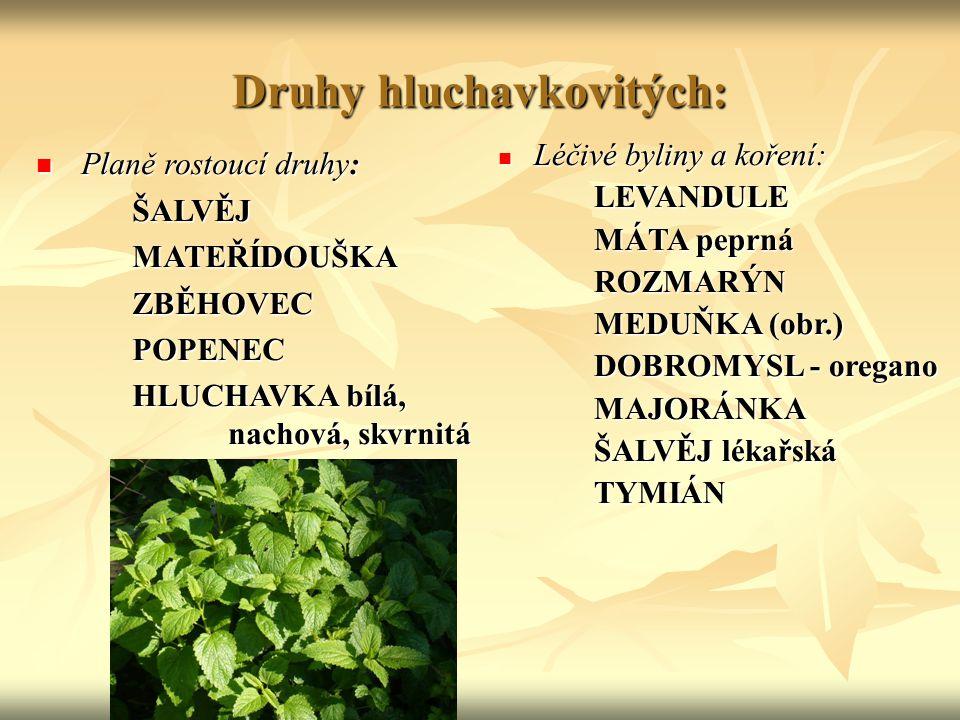 Druhy hluchavkovitých: Planě rostoucí druhy: Planě rostoucí druhy:ŠALVĚJMATEŘÍDOUŠKAZBĚHOVECPOPENEC HLUCHAVKA bílá, nachová, skvrnitá Léčivé byliny a
