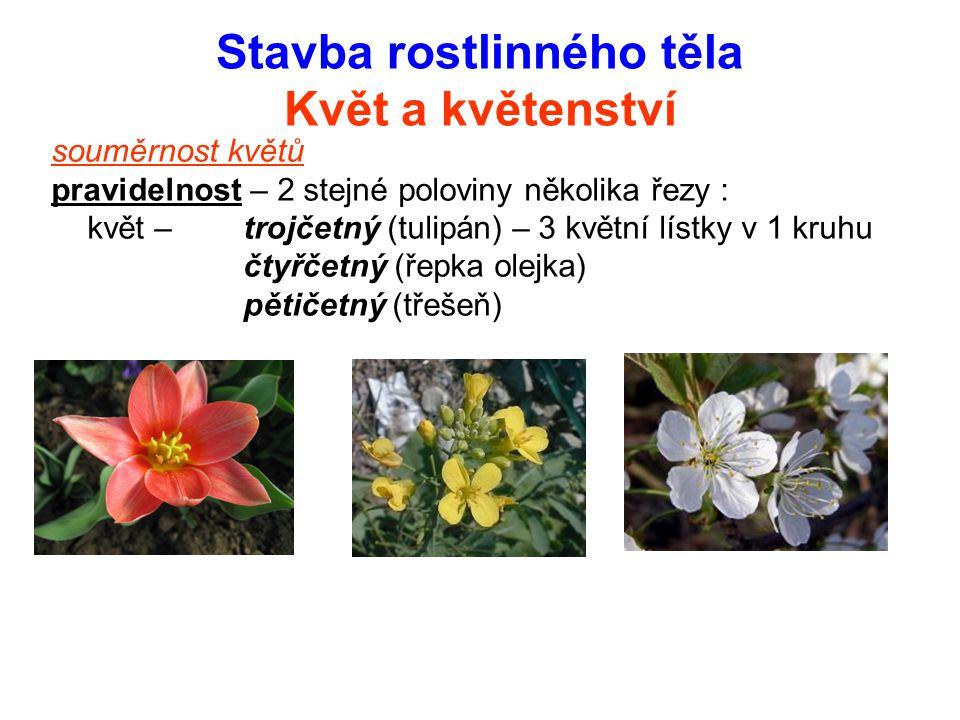 Stavba rostlinného těla Květ a květenství souměrnost květů pravidelnost – 2 stejné poloviny několika řezy : květ – trojčetný (tulipán) – 3 květní líst