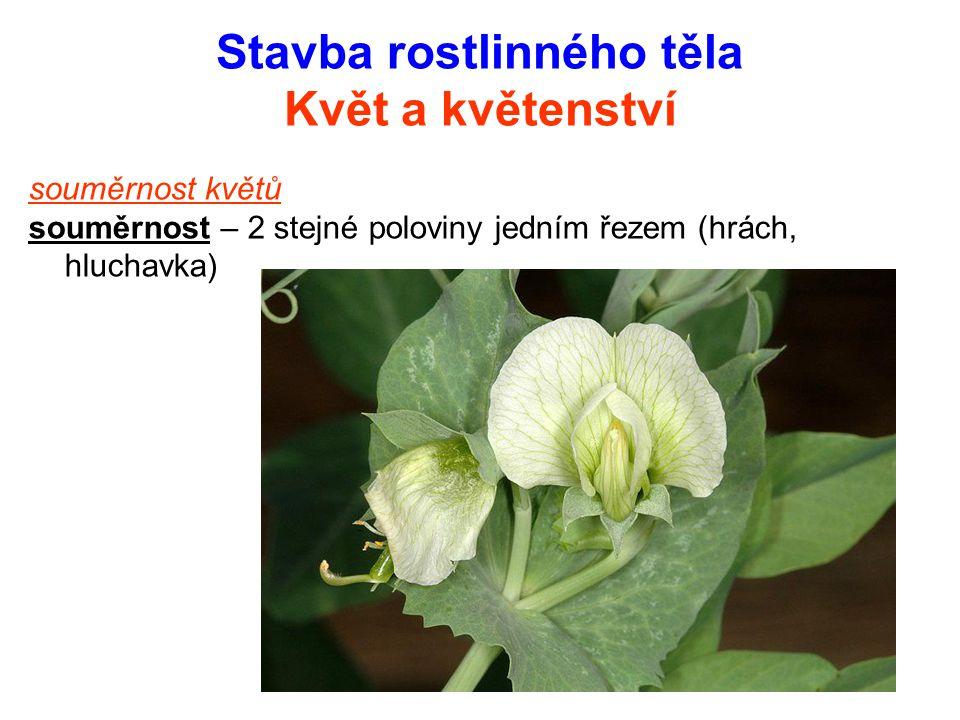 Stavba rostlinného těla Květ a květenství souměrnost květů souměrnost – 2 stejné poloviny jedním řezem (hrách, hluchavka)
