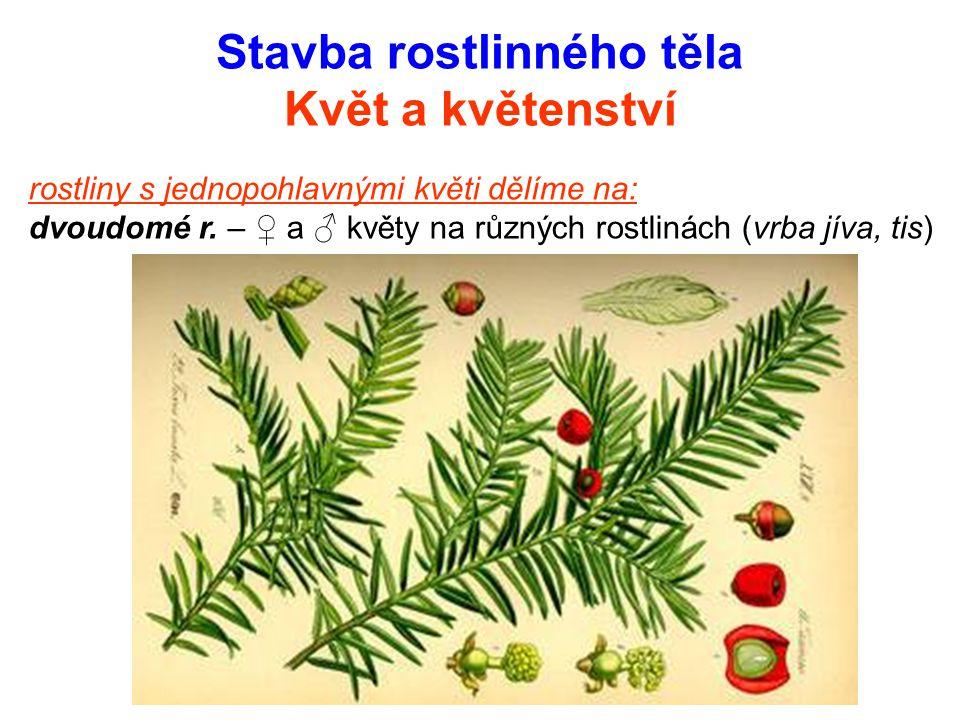 Stavba rostlinného těla Květ a květenství rostliny s jednopohlavnými květi dělíme na: dvoudomé r. – ♀ a ♂ květy na různých rostlinách (vrba jíva, tis)
