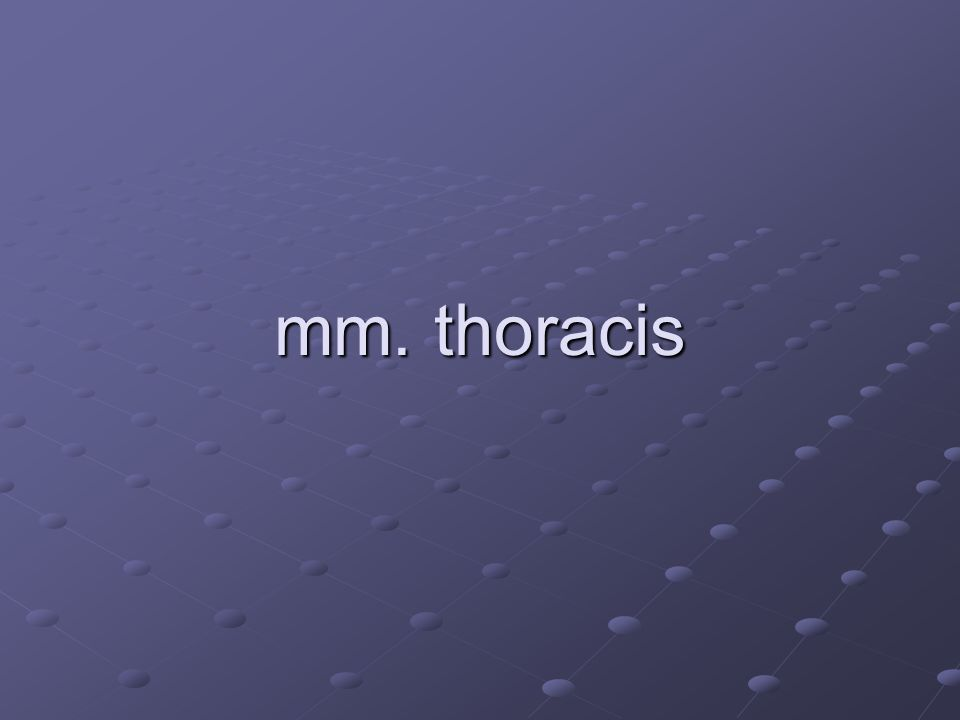 mm. thoracis