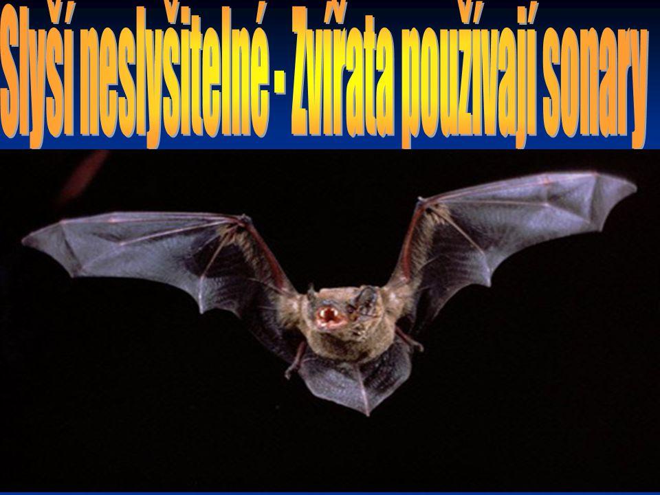 Echolokace se vyvinula u několika skupin živočichů.