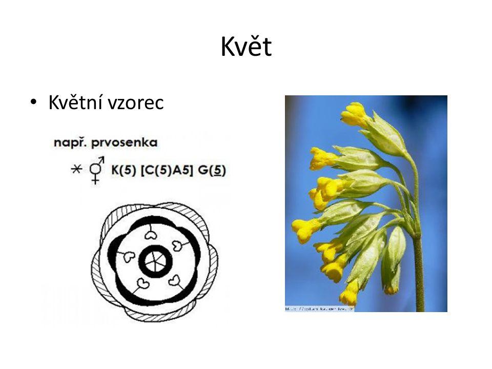 Květ Květní vzorec