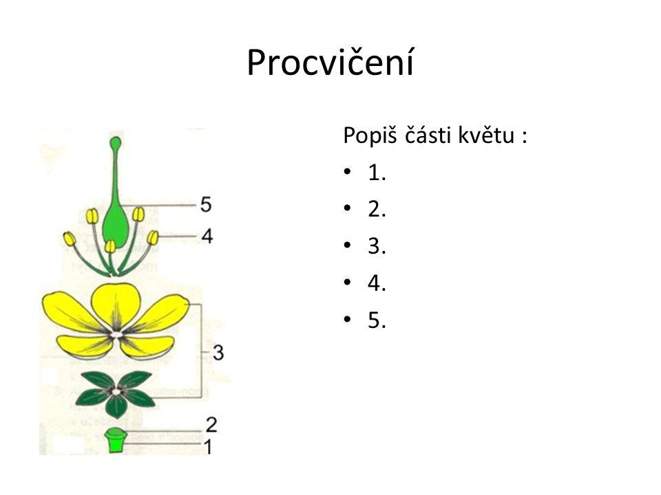 Procvičení popiš části květ Popiš části květu : 1. 2. 3. 4. 5.