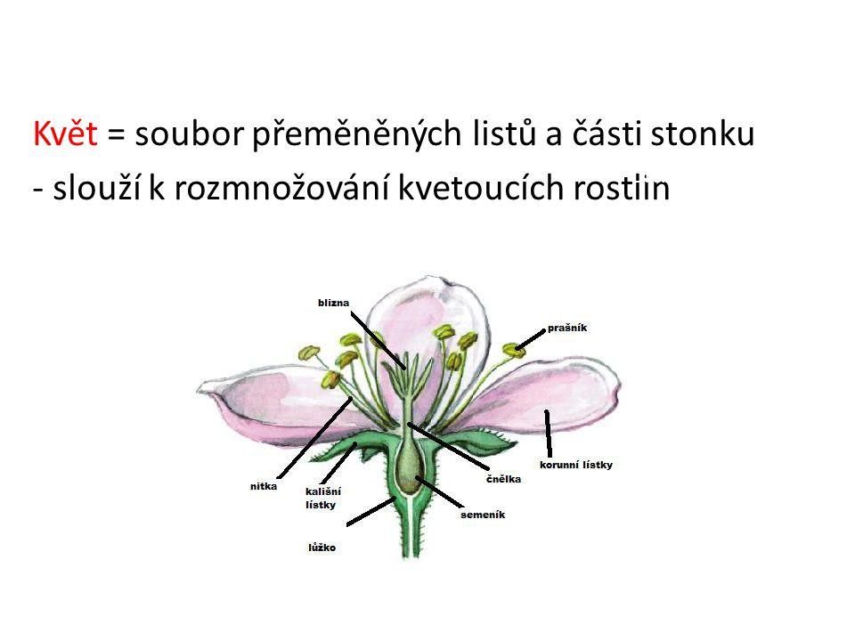 Květ = soubor přeměněných listů a části stonku - slouží k rozmnožování kvetoucích rostlin (nemají ho všechny rostliny) z listů – tyčinky, pestík, květní obaly ze stonku – květní lůžko Drchnička modrá Koniklec